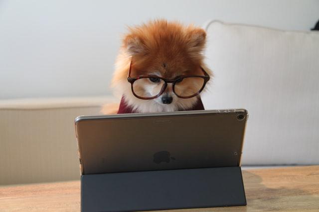 pies w okularach przy laptopie